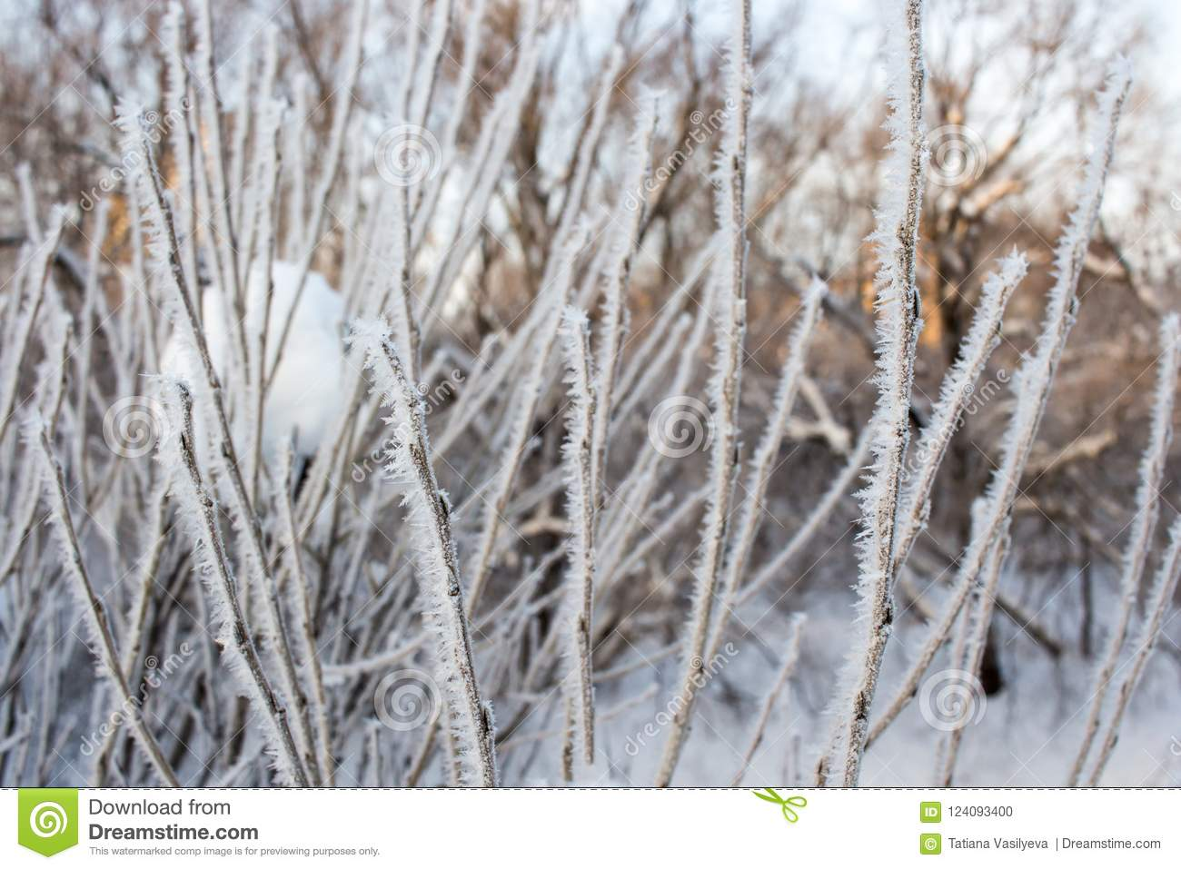 Crystallized fairy tree. Wintr background.