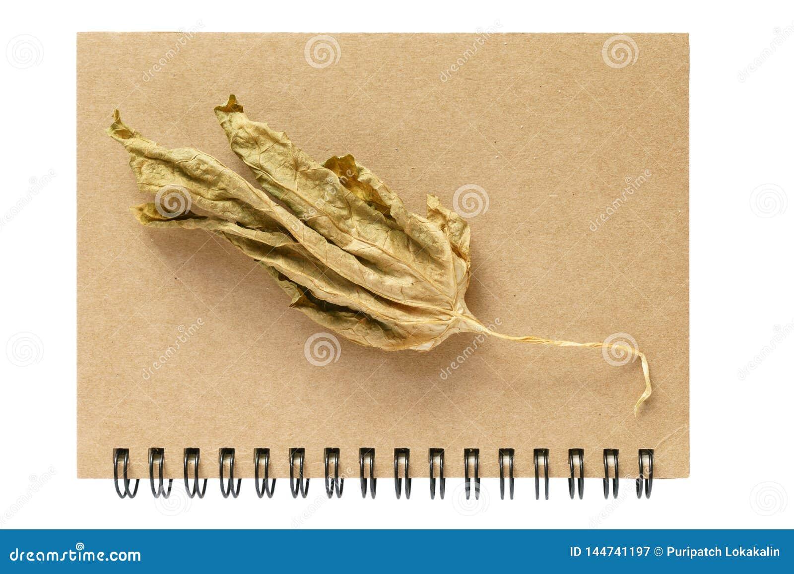 Cuaderno y una hoja seca