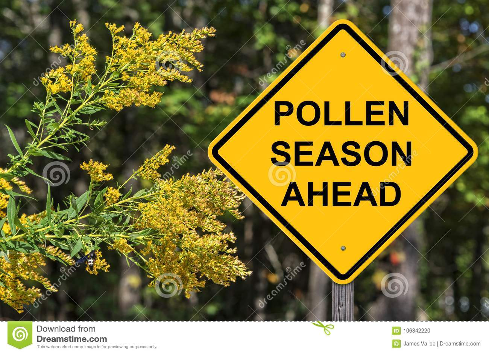 Cuation - сезон цветня вперед