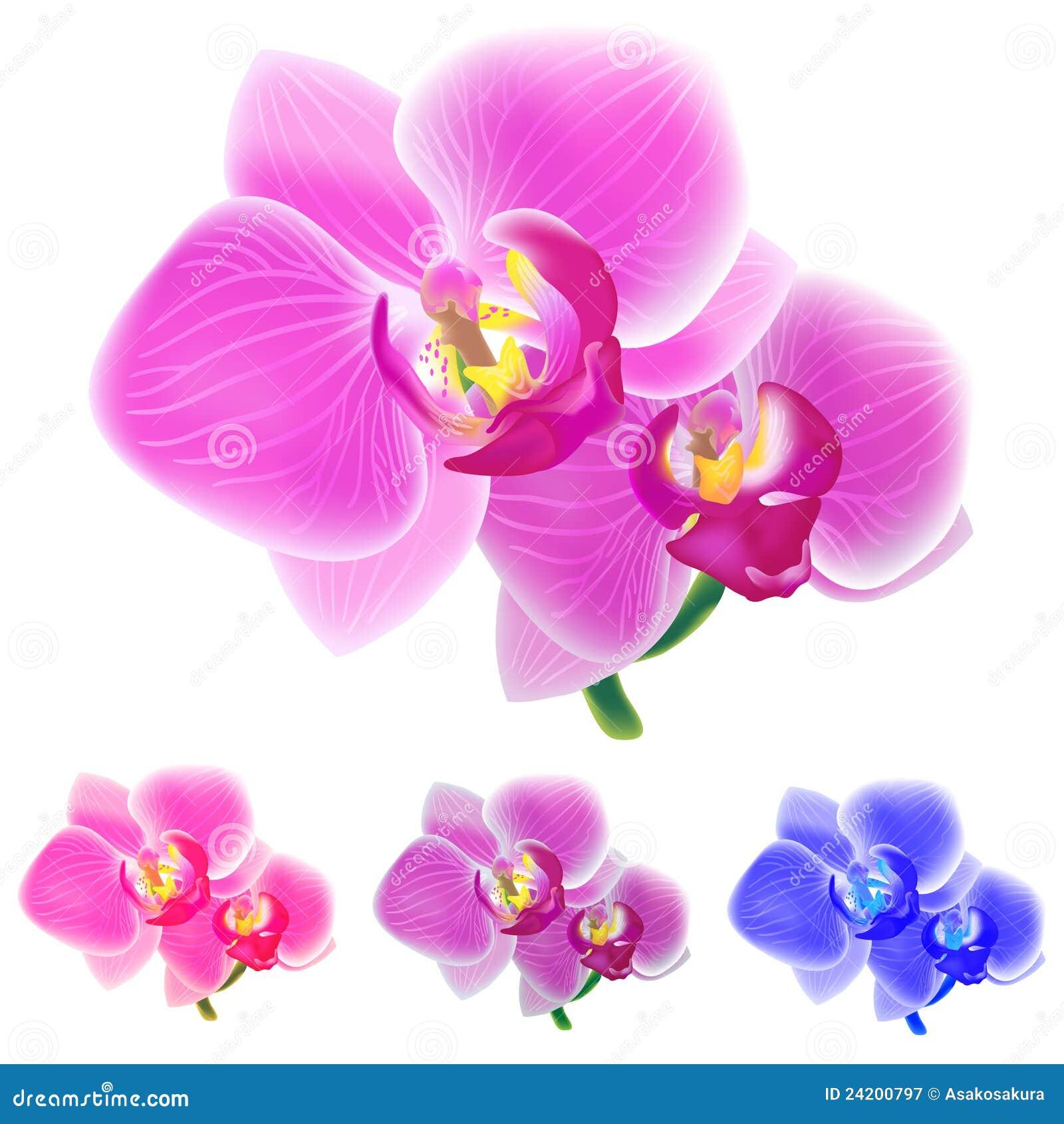 Cuatro colorearon orquídeas aisladas en el fondo blanco. Fotografía de archivo libre de regalías