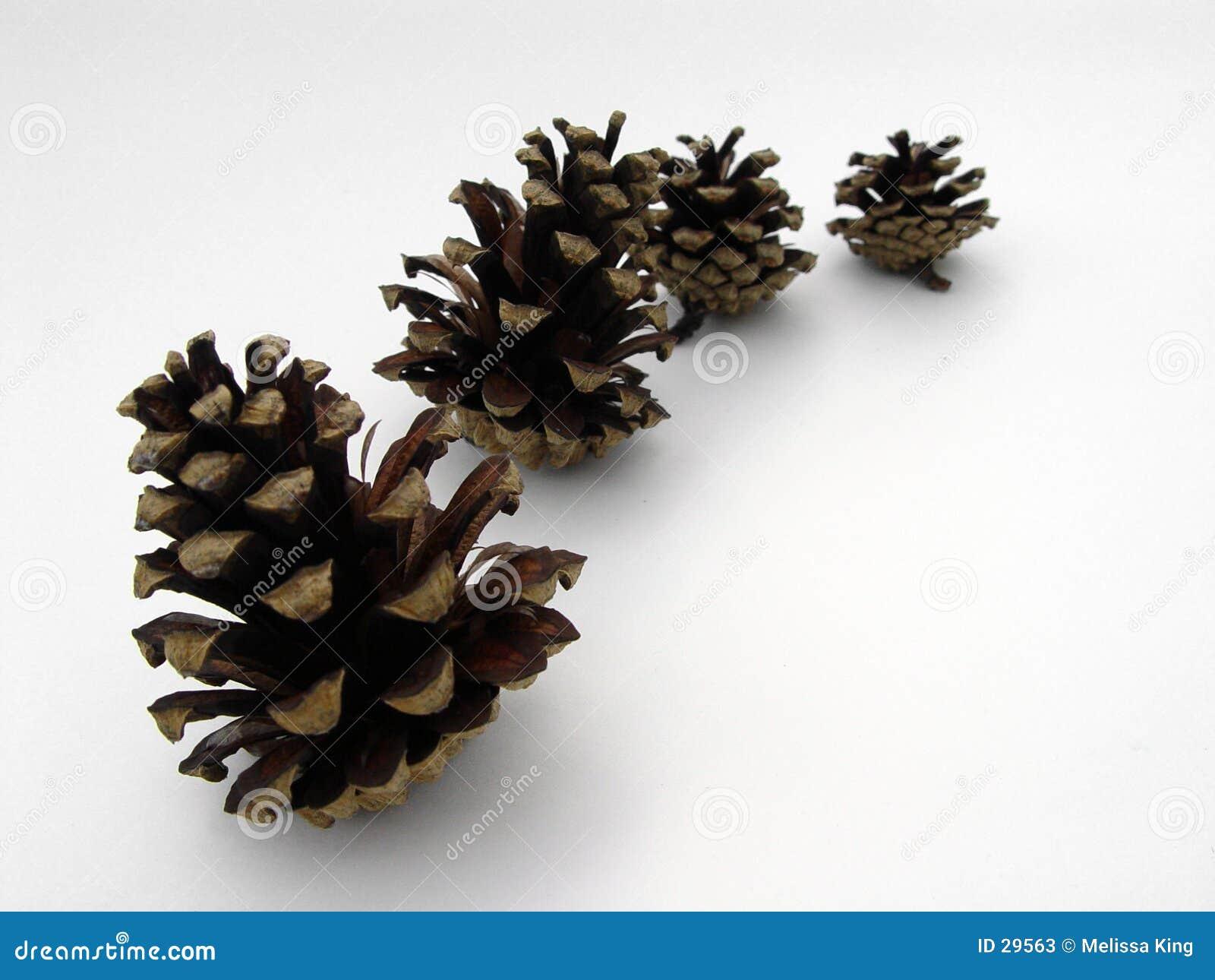 Cuatro conos del pino