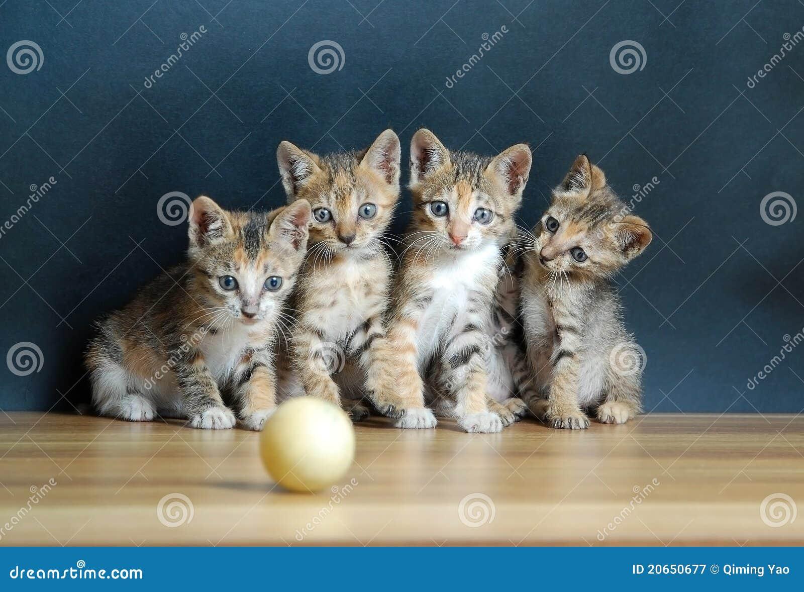 Cuatro gatos lindos