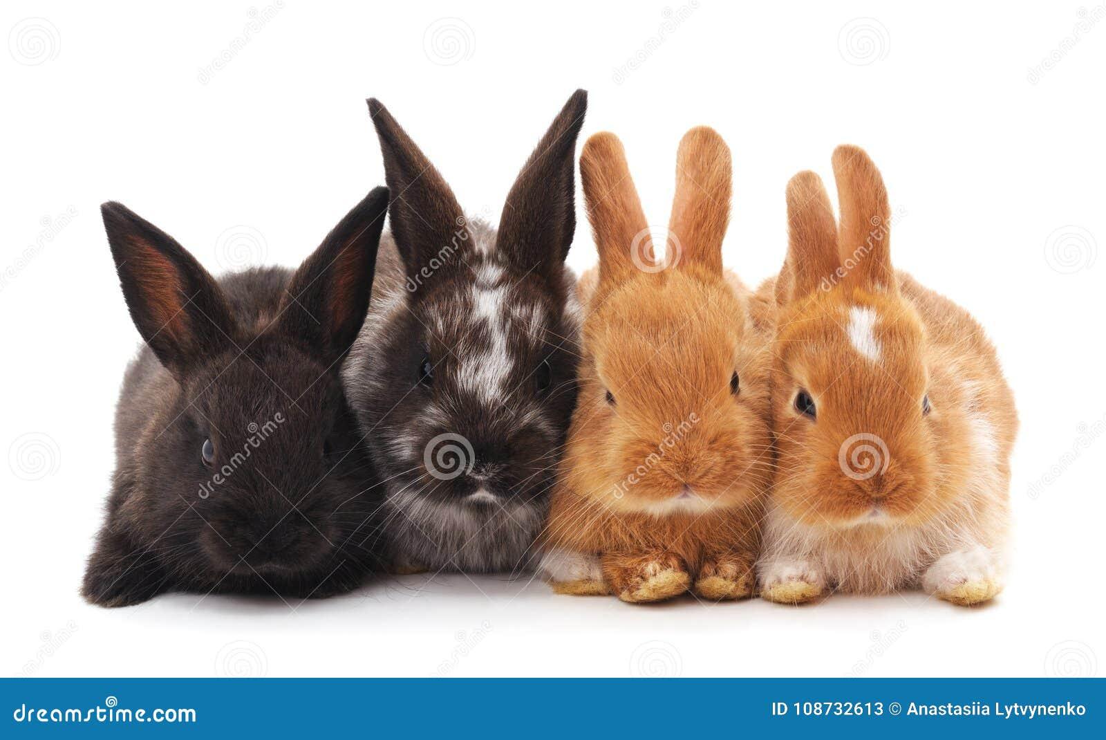 Cuatro pequeños conejos