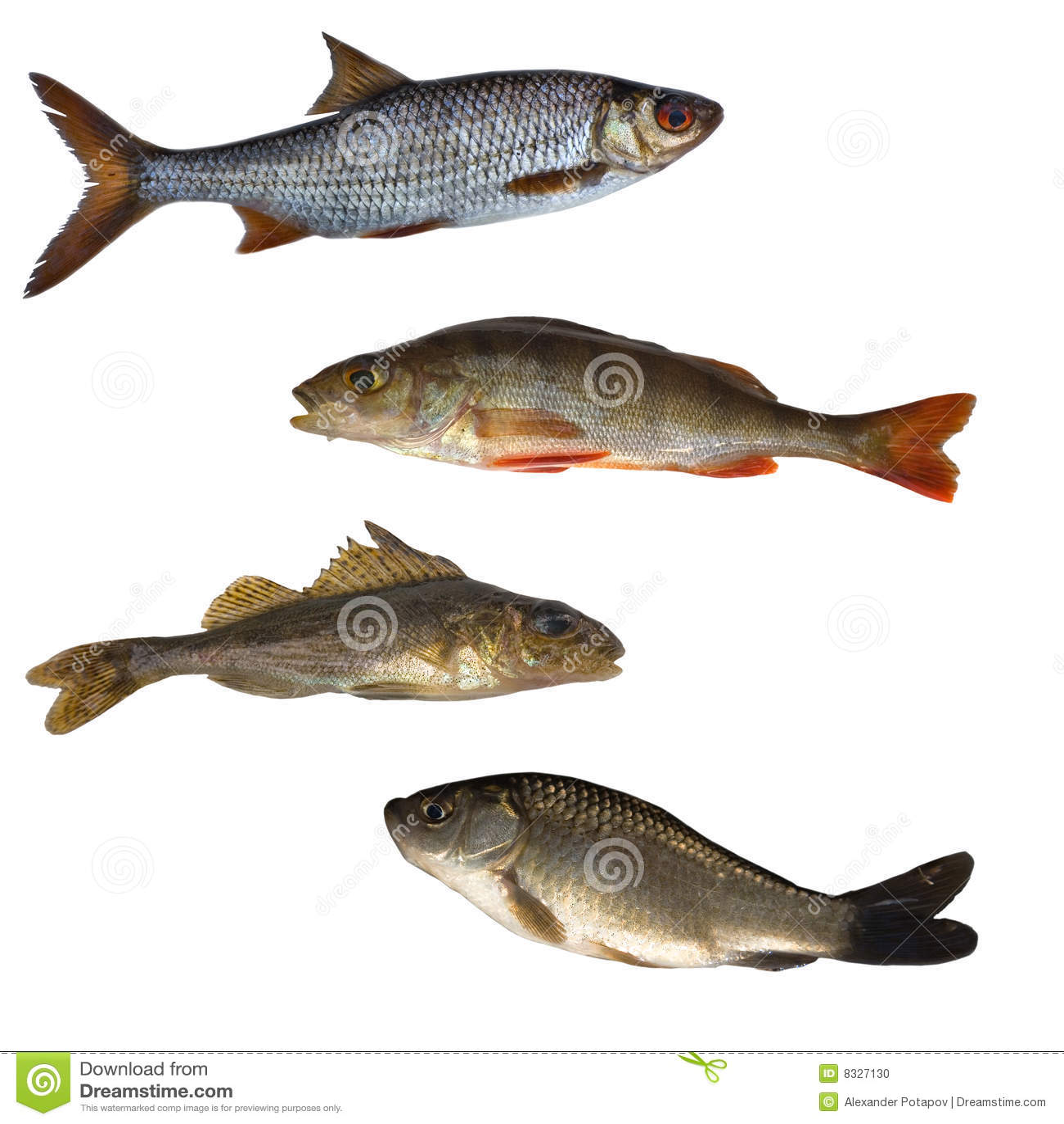 Cuatro pescados aislados