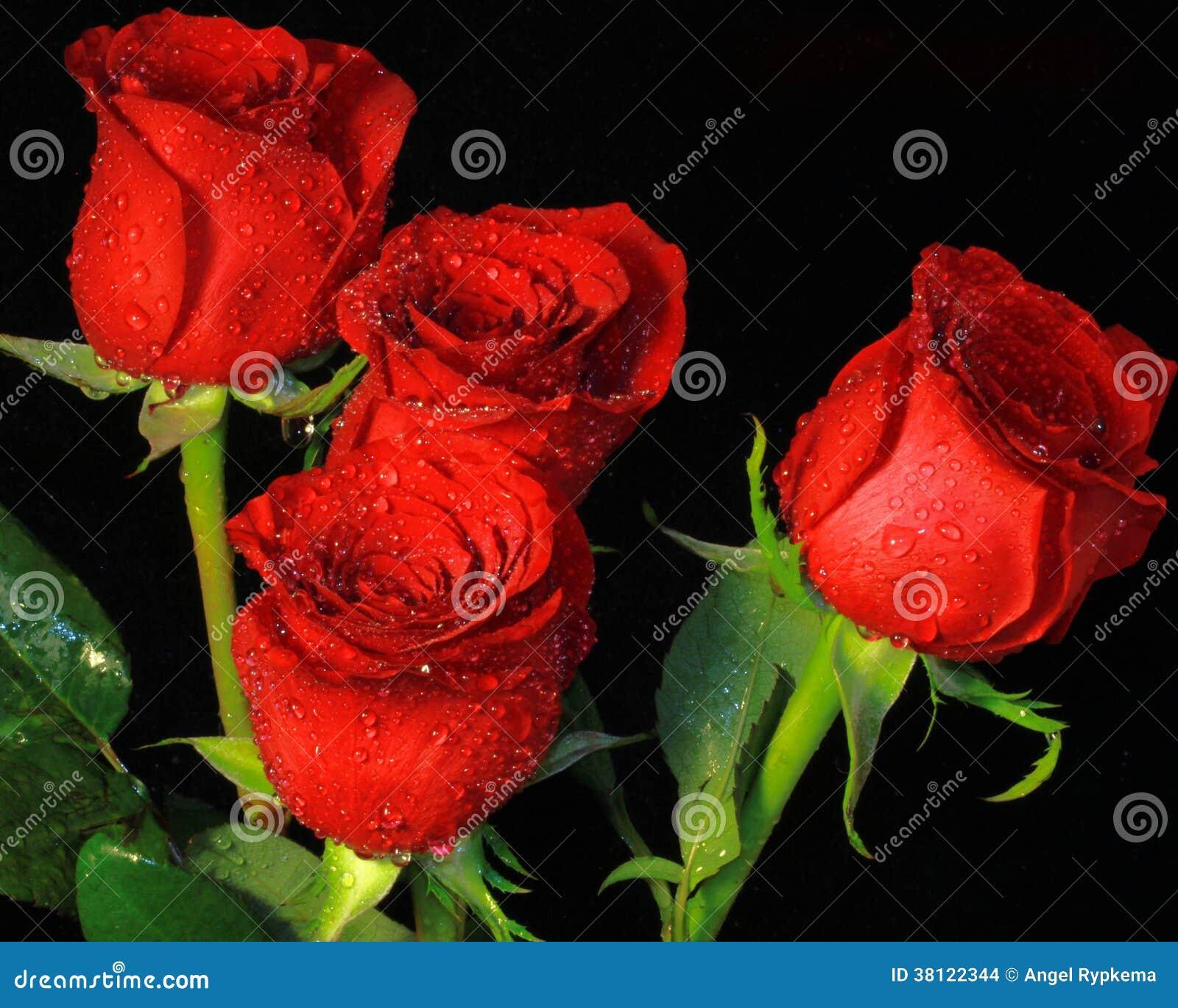 Cuatro Rosas Hermosas Imagenes de archivo - Imagen: 38122344