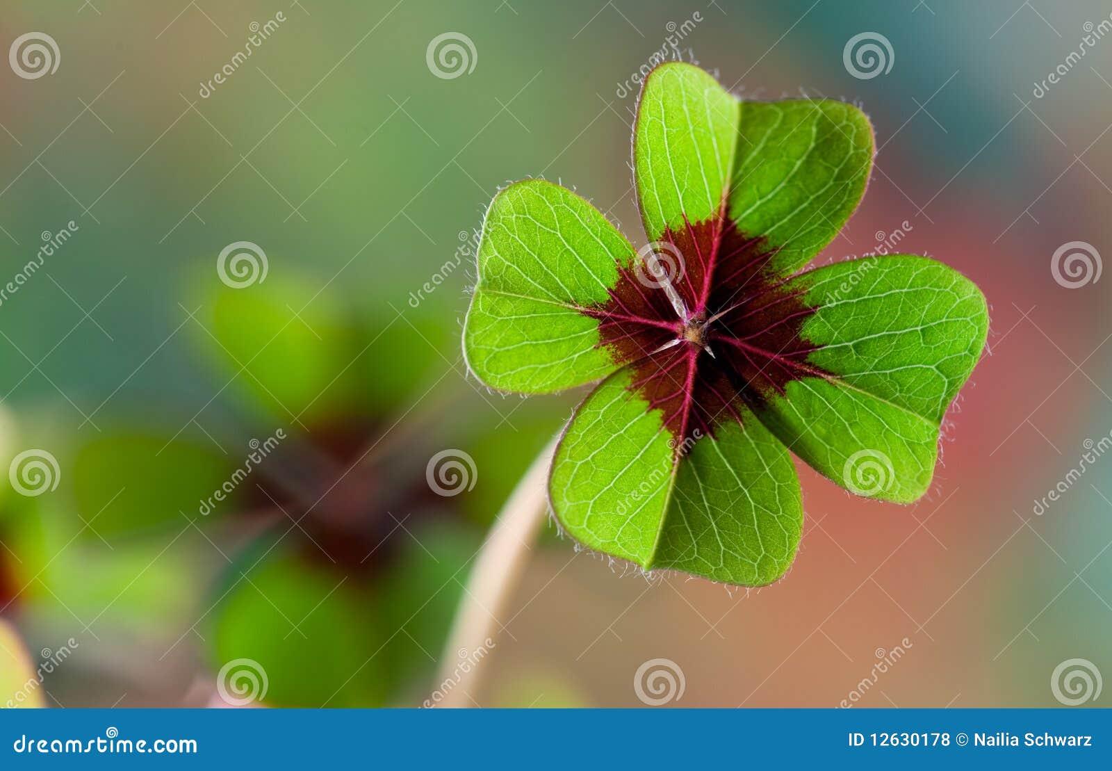 Cuatro - Trébol con hojas