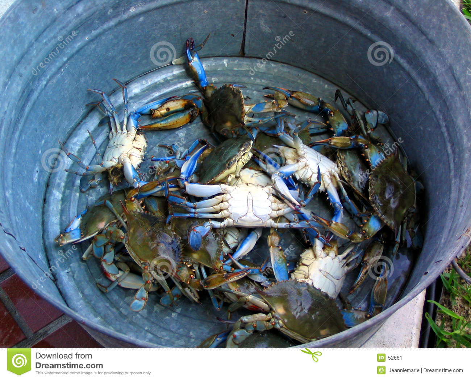 Cubeta de caranguejos azuis