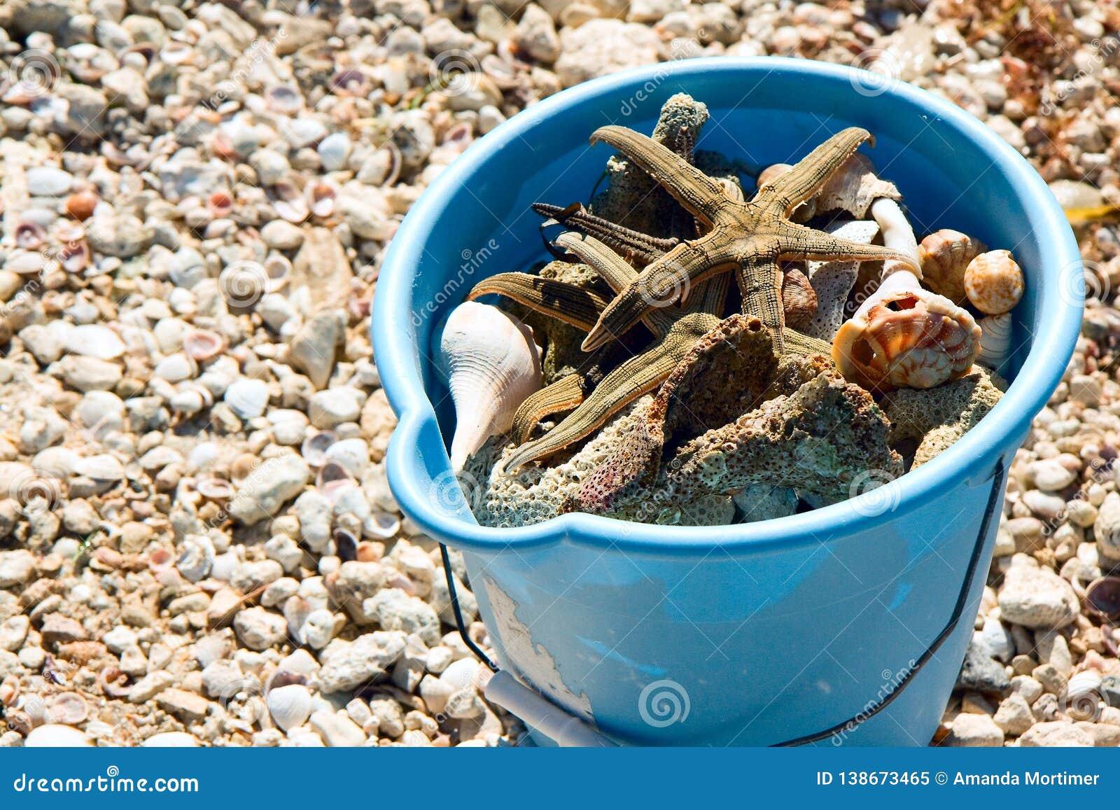 Cubo azul de la playa por completo de cáscaras