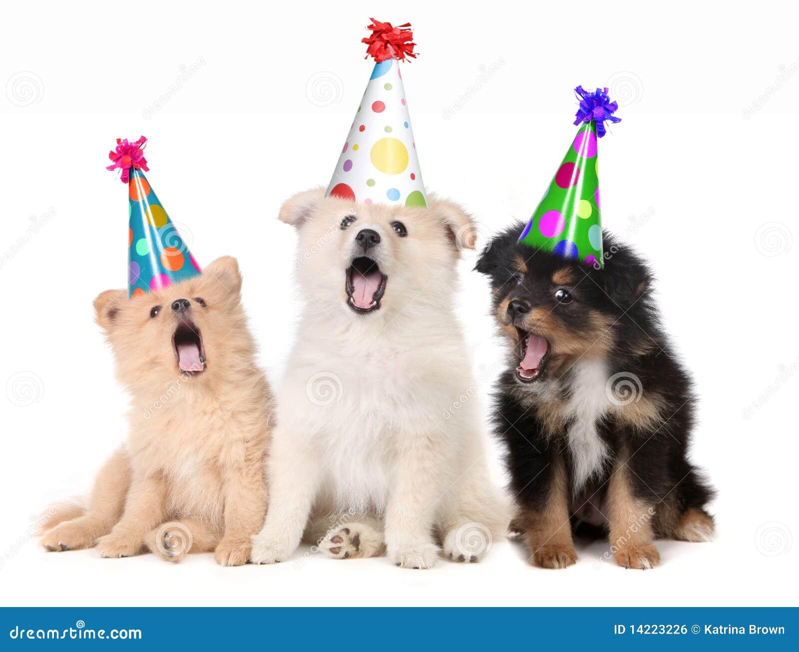 Cuccioli Che Cantano Canzone Di Buon Compleanno Fotografia Stock