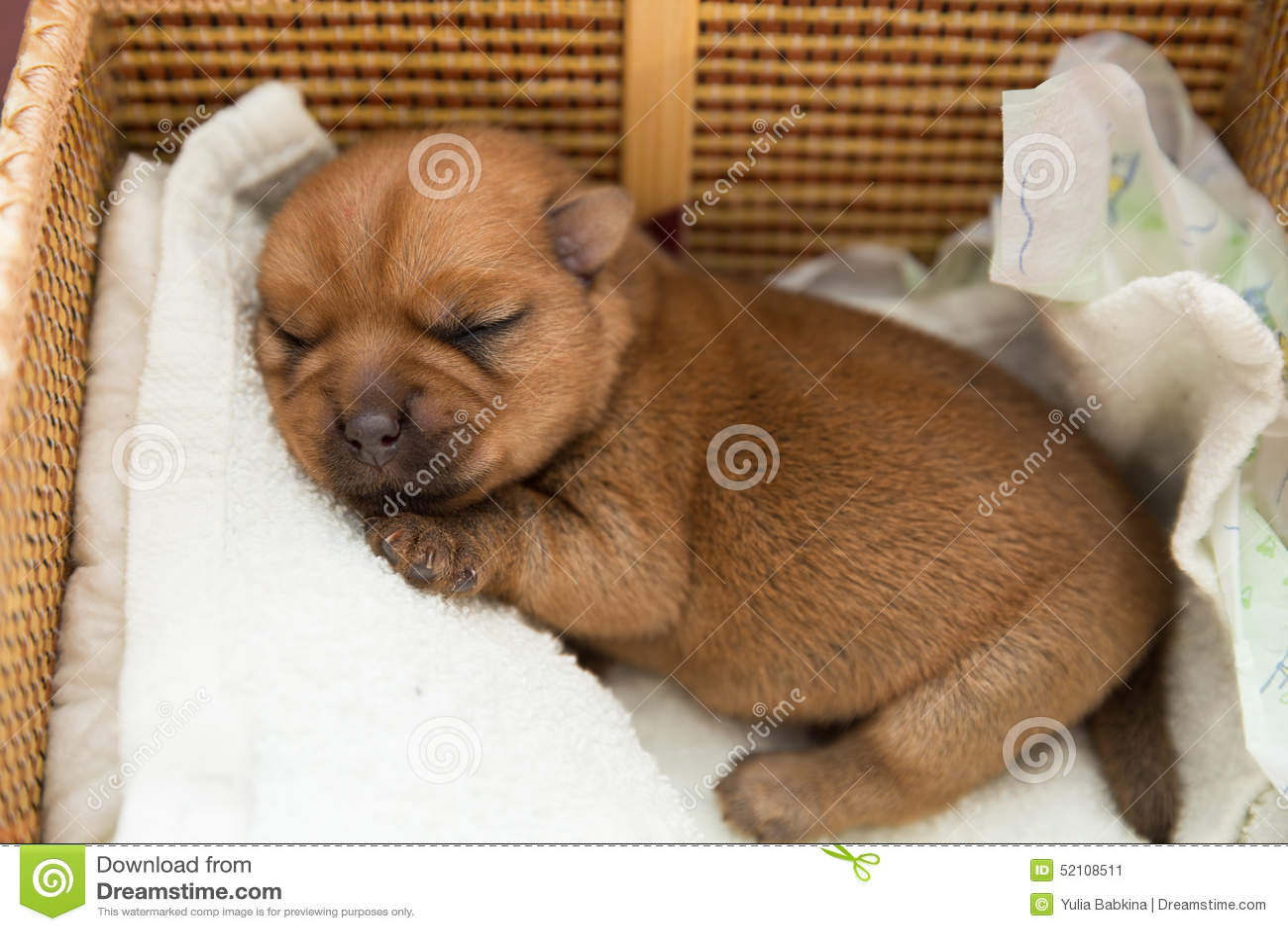 Cucciolo Appena Nato Immagine Stock Immagine Di Sonno 52108511