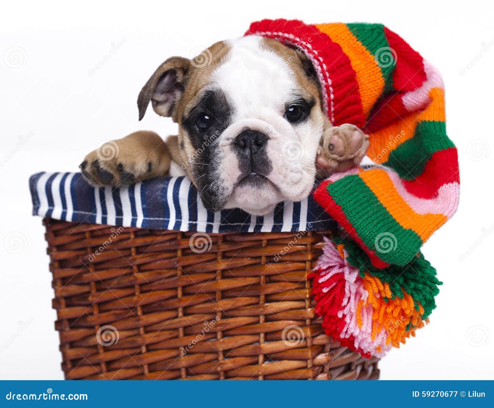 Cucciolo In Cappello Di Gnomo Immagine Stock Immagine Di Allarme