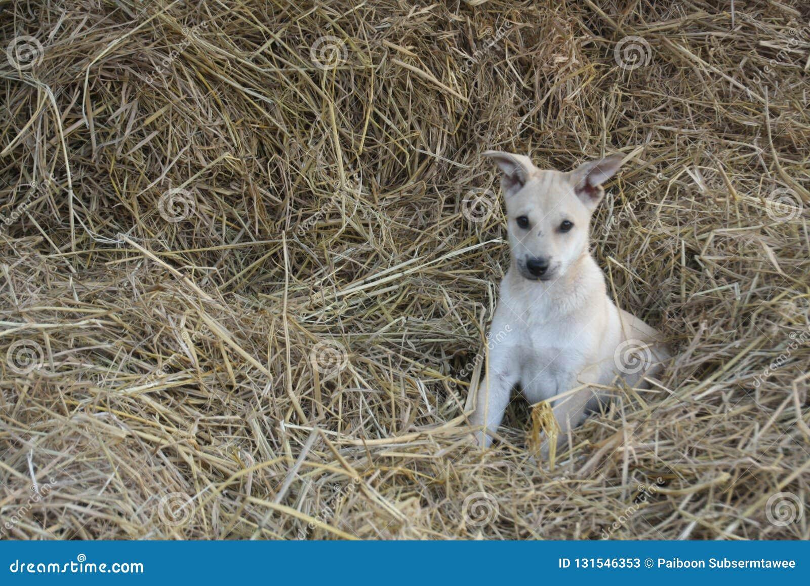 Cucciolo che gioca in una paglia