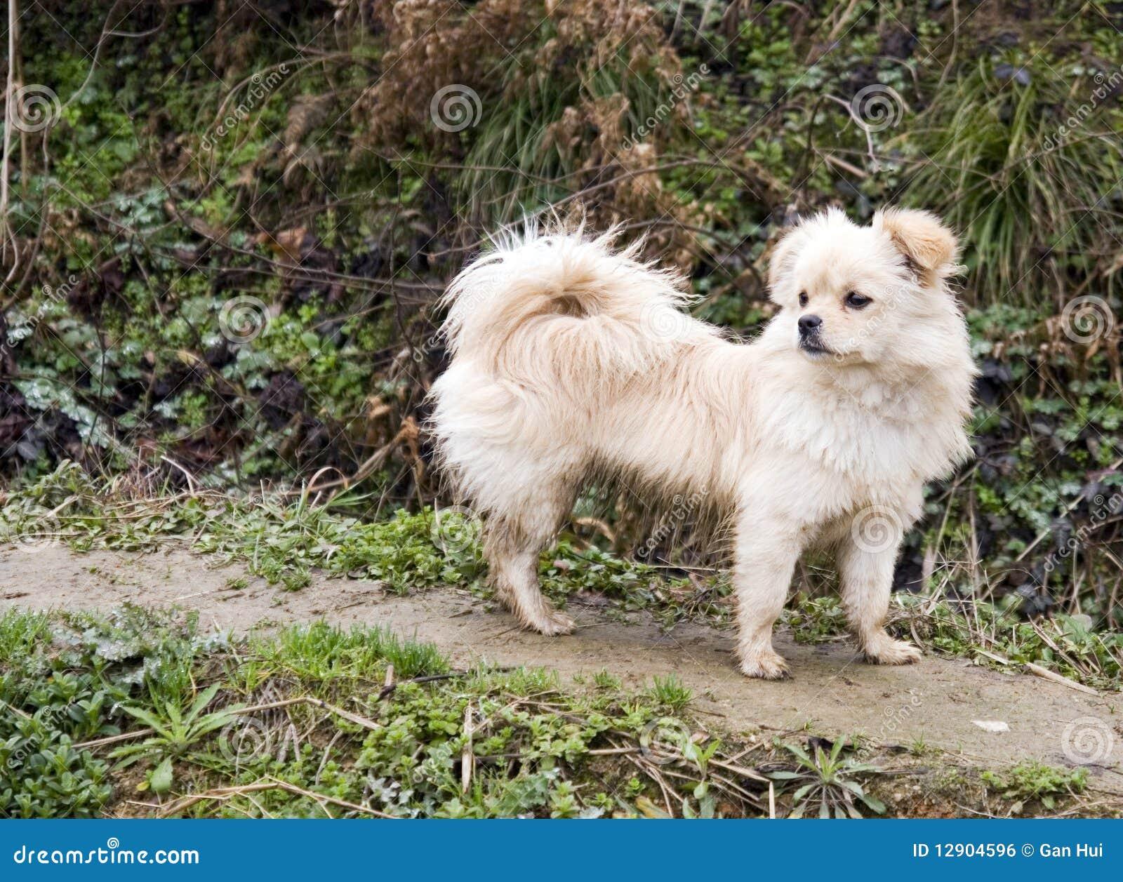 Cucciolo che guarda lontano