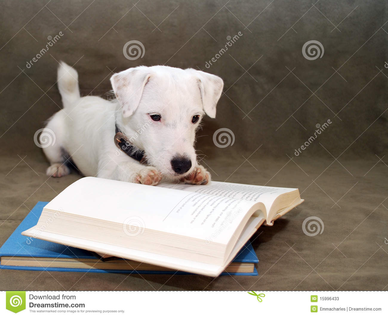 Cucciolo che legge un libro