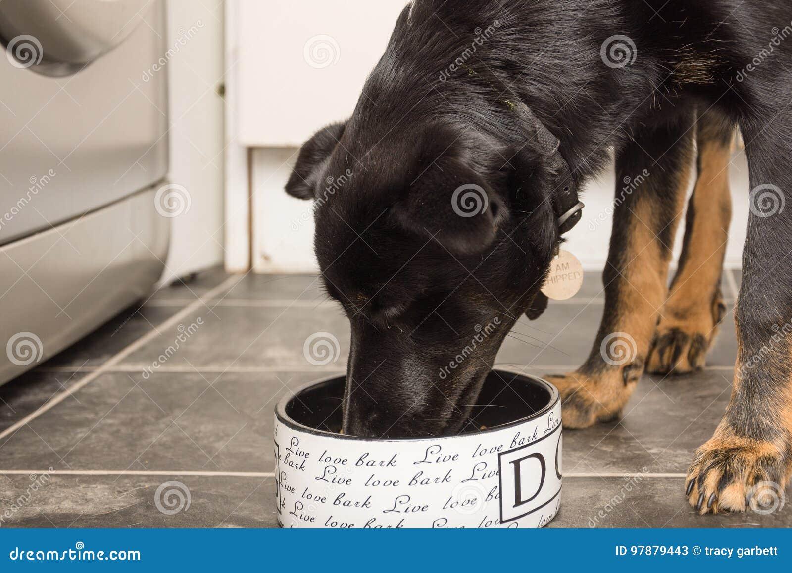Cucciolo Del Pastore Tedesco Che Mangia Cibo Per Cani Da Una Ciotola