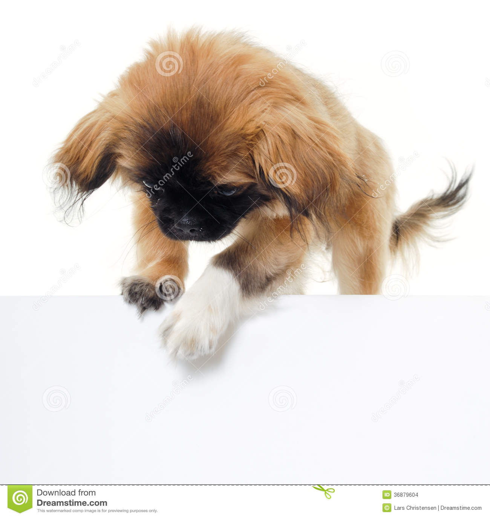 Download Cucciolo Di Cane E Segno In Bianco Fotografia Stock - Immagine di espressione, tenuta: 36879604