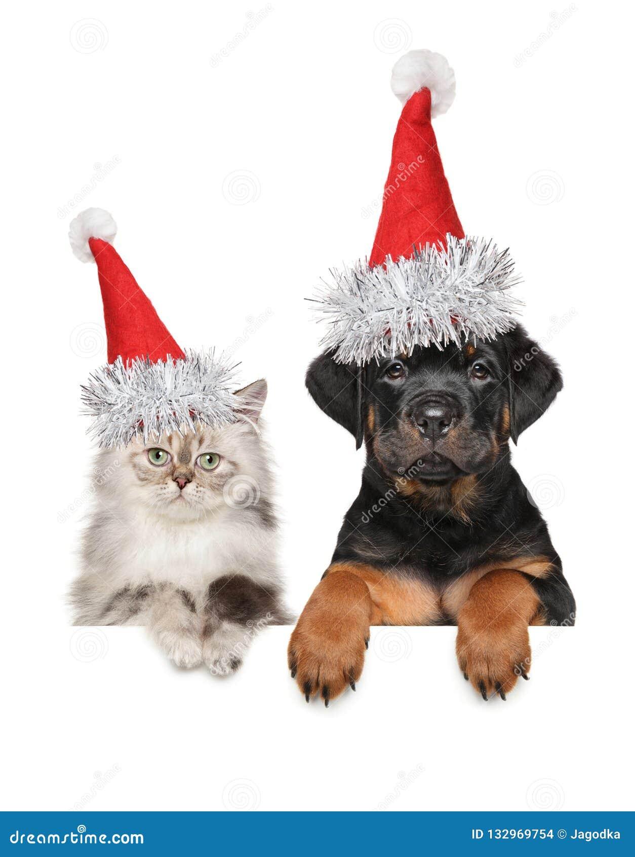Cucciolo E Gattino In Cappello Rosso Di Santa Sopra Linsegna