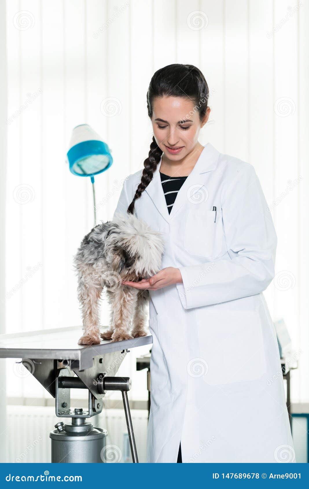 Cucciolo malato d esame veterinario