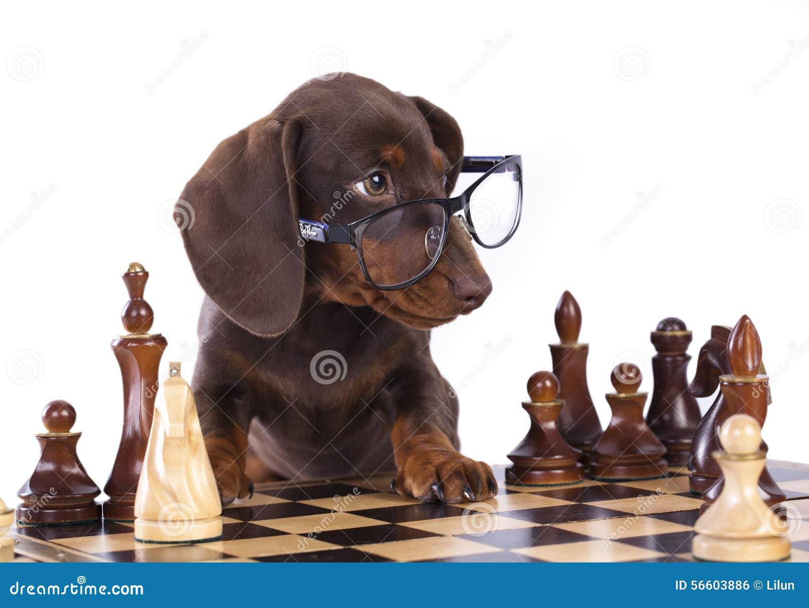 Cucciolo in vetri e negli scacchi