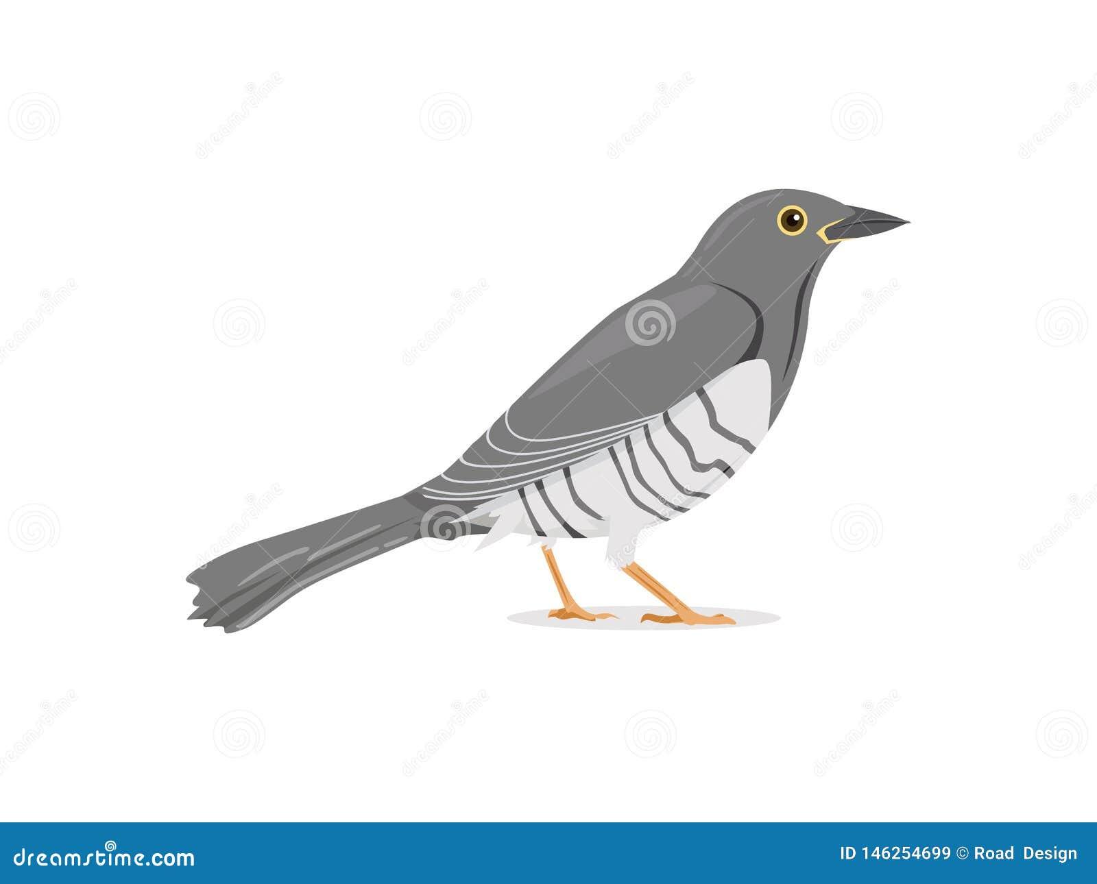 Cuckoo Bird Stand Still Vector Illustration