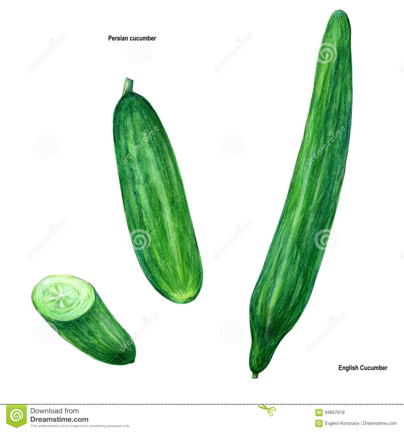 Cucumber, Drawing, Picture, Color Stock Illustration ... for Drawing Cucumber  45ifm