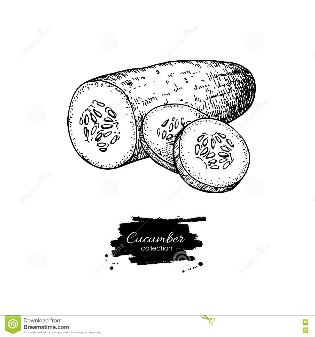 Cucumber Hand Drawn . Cucumber And Sliced Pieces. Stock Vector ... for Drawing Cucumber  300lyp