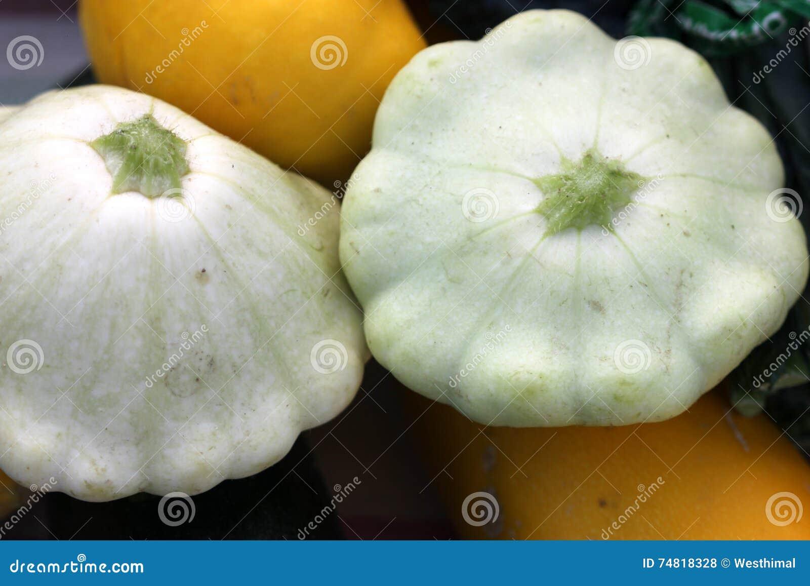 Cucurbita Pepo White Pattypan Squash Stock Photo Image of green