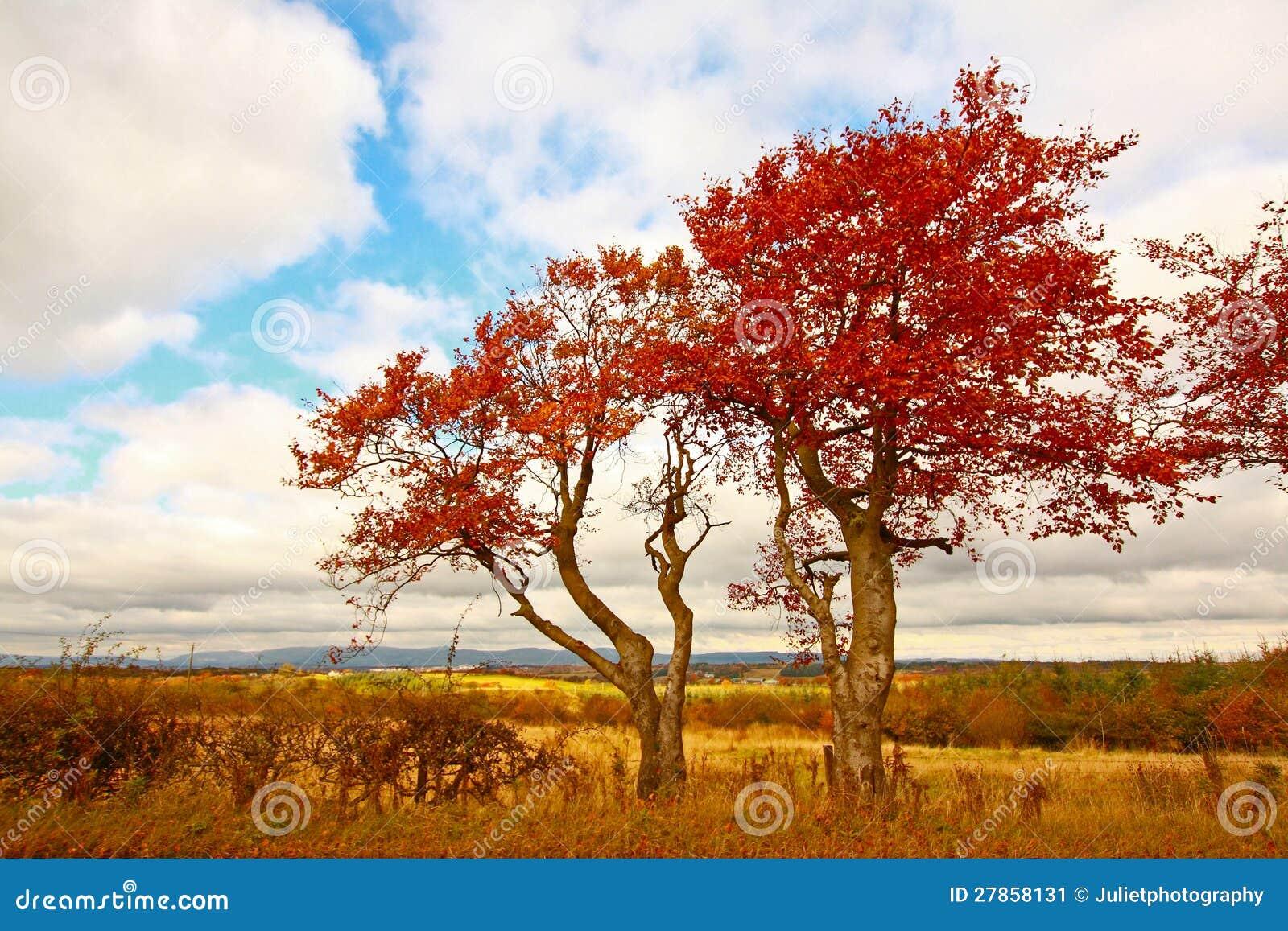 Cudowna jesienna scena z polami i drzewami.