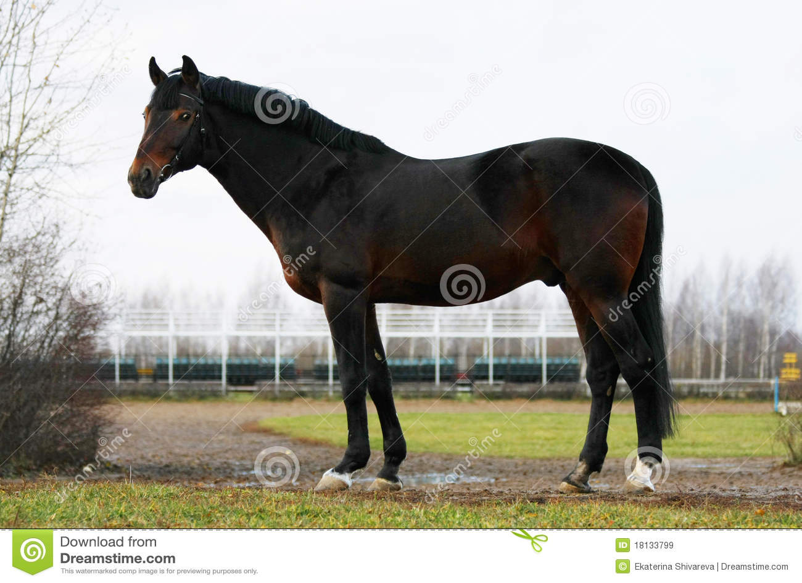 Cudowny podpalany koń