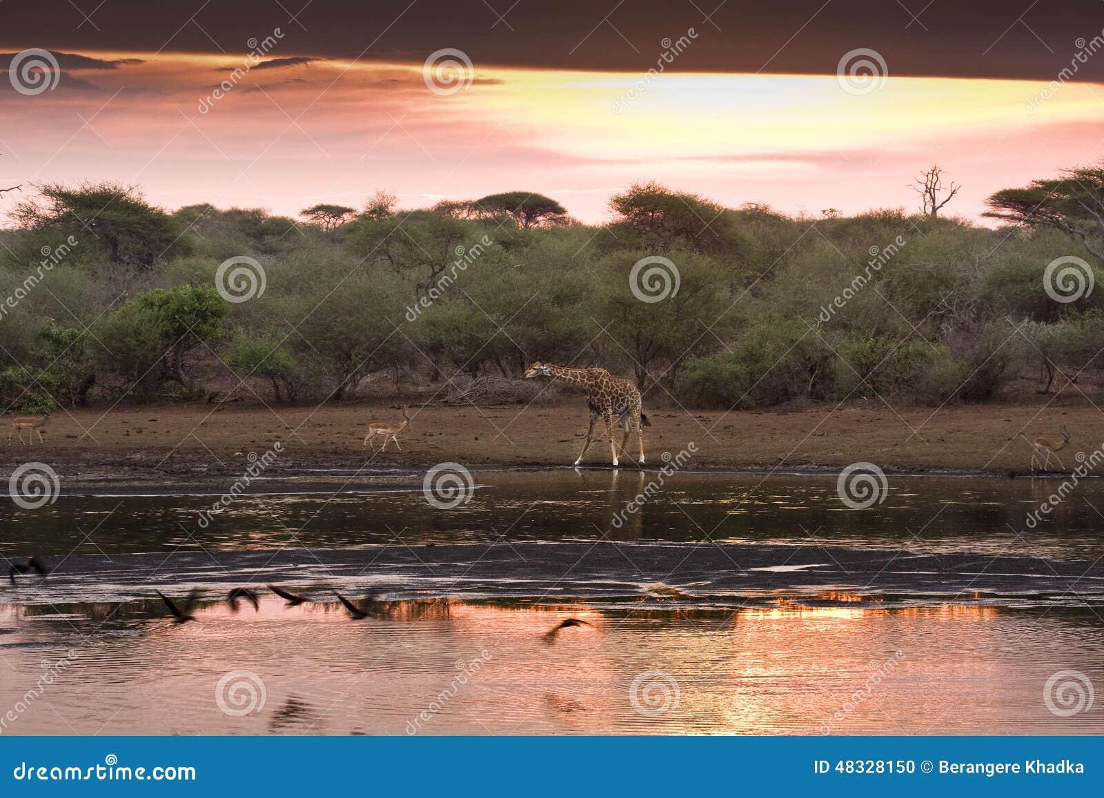 Cudowny zmierzch, Kruger park narodowy, POŁUDNIOWA AFRYKA
