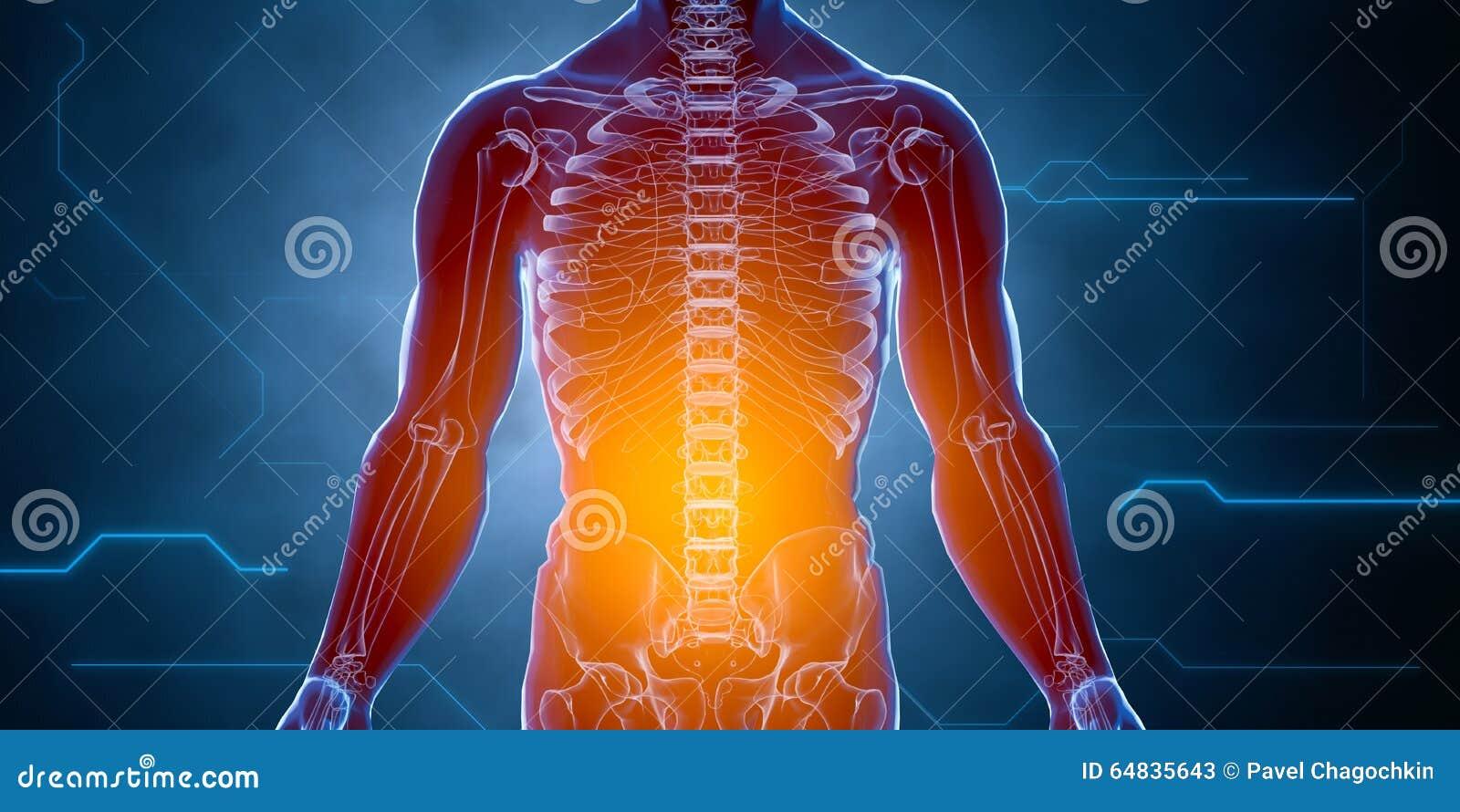 Contemporáneo Anatomía Cateterismo Hembra Composición - Anatomía de ...