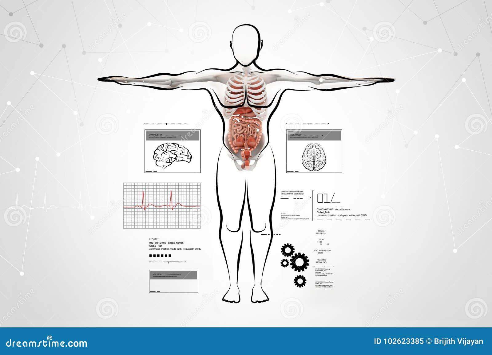 Magnífico Sistema Digestivo Humano Marcado Imágenes - Anatomía de ...