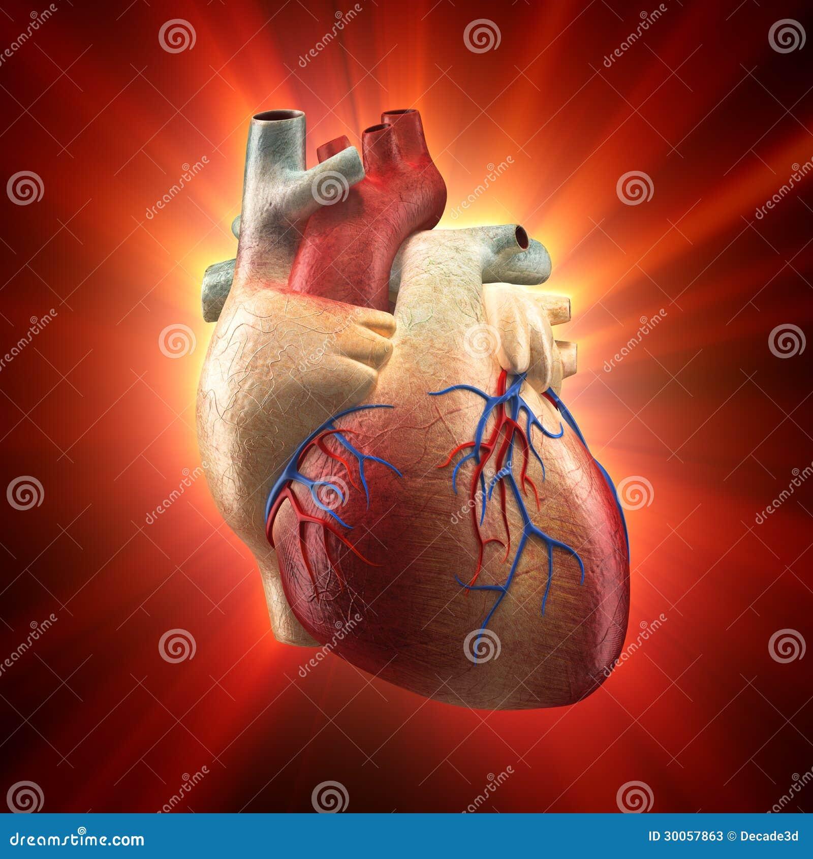 Excepcional Imágenes Reales Del Cuerpo Humano Molde - Anatomía de ...