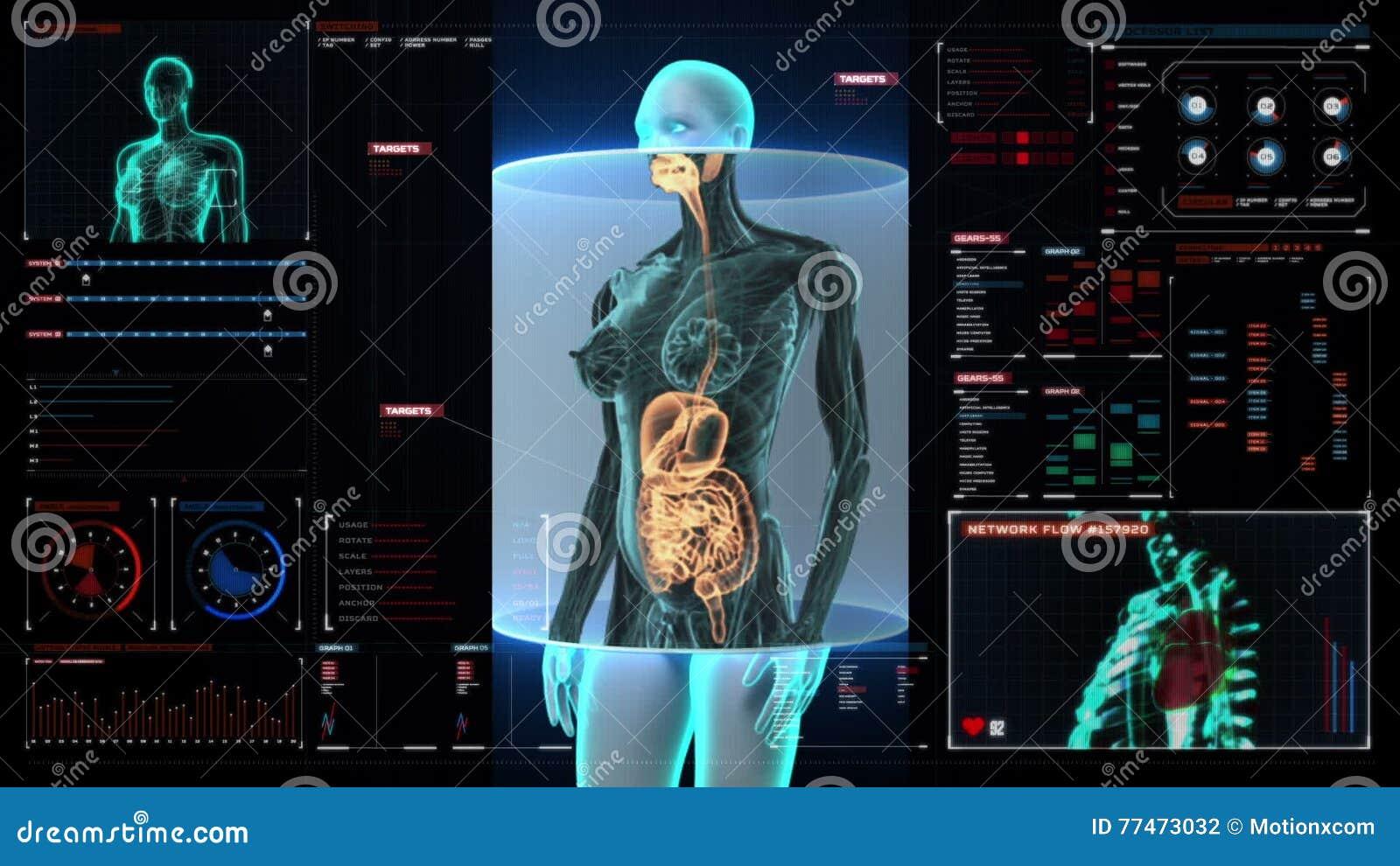 Cuerpo Humano Femenino De Enfoque Que Explora Los órganos Internos ...