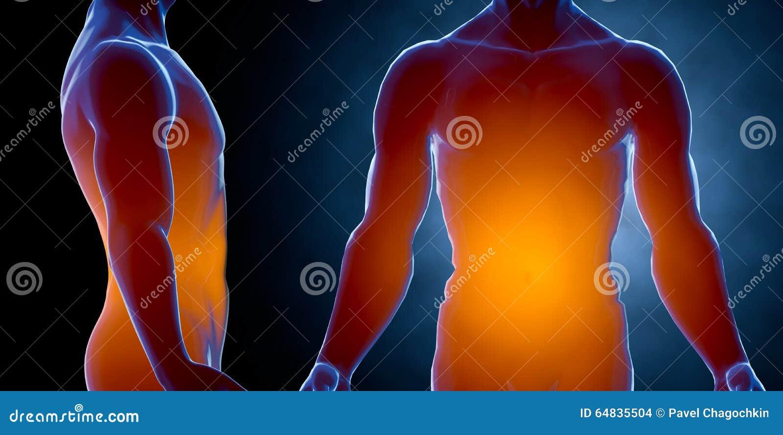 Cuerpo Masculino Humano Del Rayo X Concepto De La Anatomía 3d Rinden ...