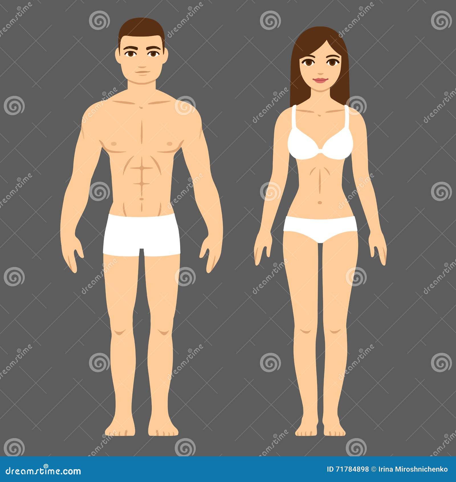 Cuerpo Masculino Y Femenino Ilustración del Vector - Ilustración de ...