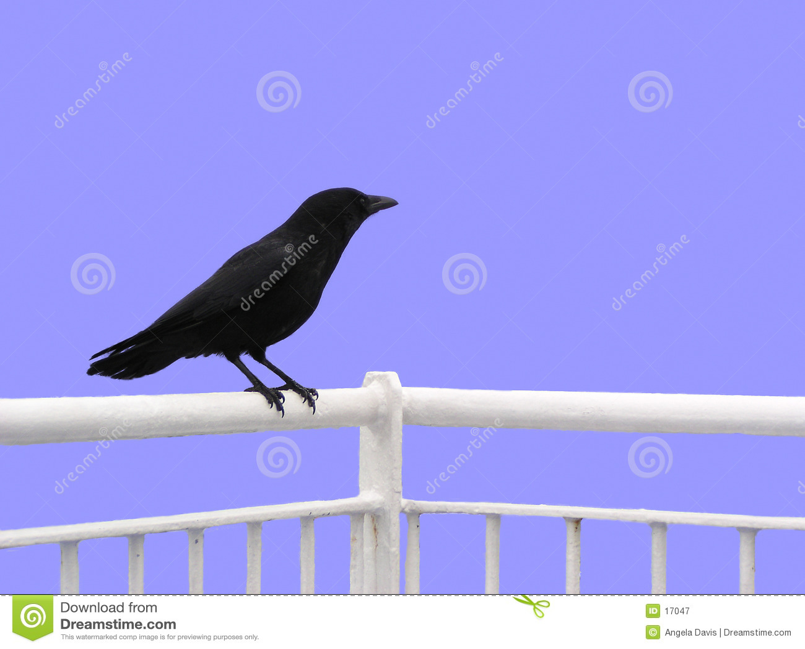 Cuervo (aislado)
