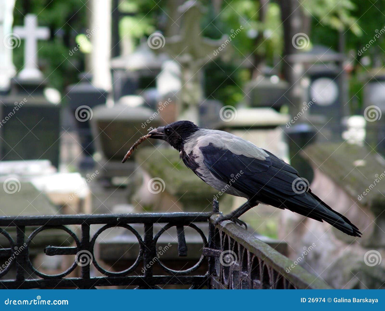 Download Cuervo en el cementerio foto de archivo. Imagen de cementerio - 26974