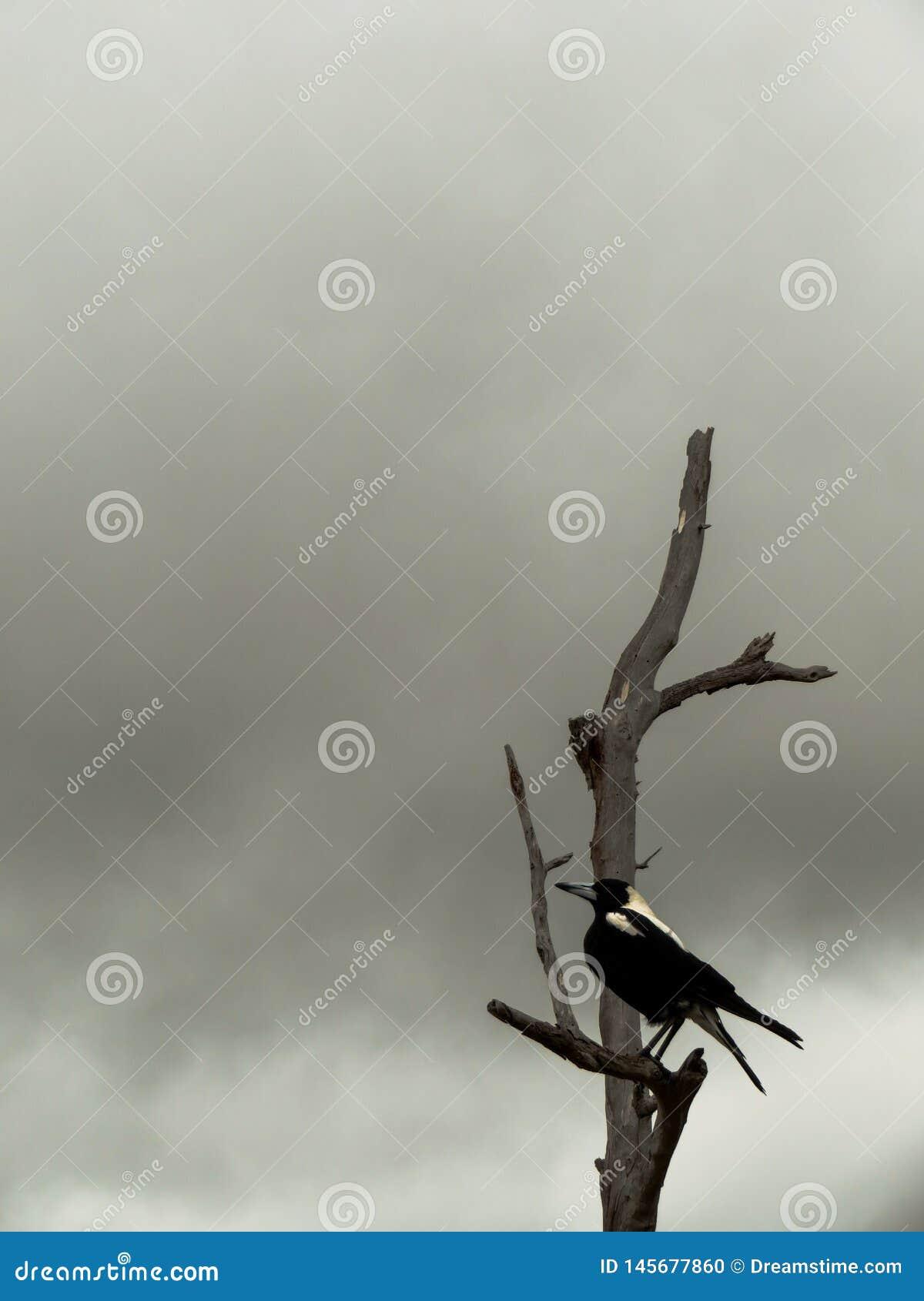 Cuervo en la niebla