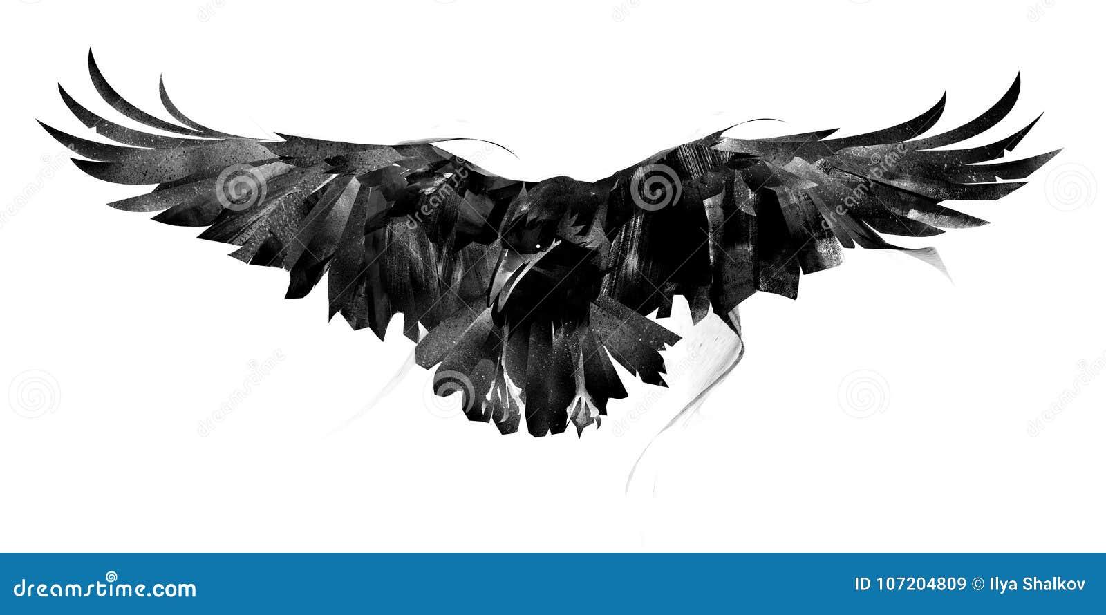 Cuervo exhausto del vuelo en el frente blanco del fondo