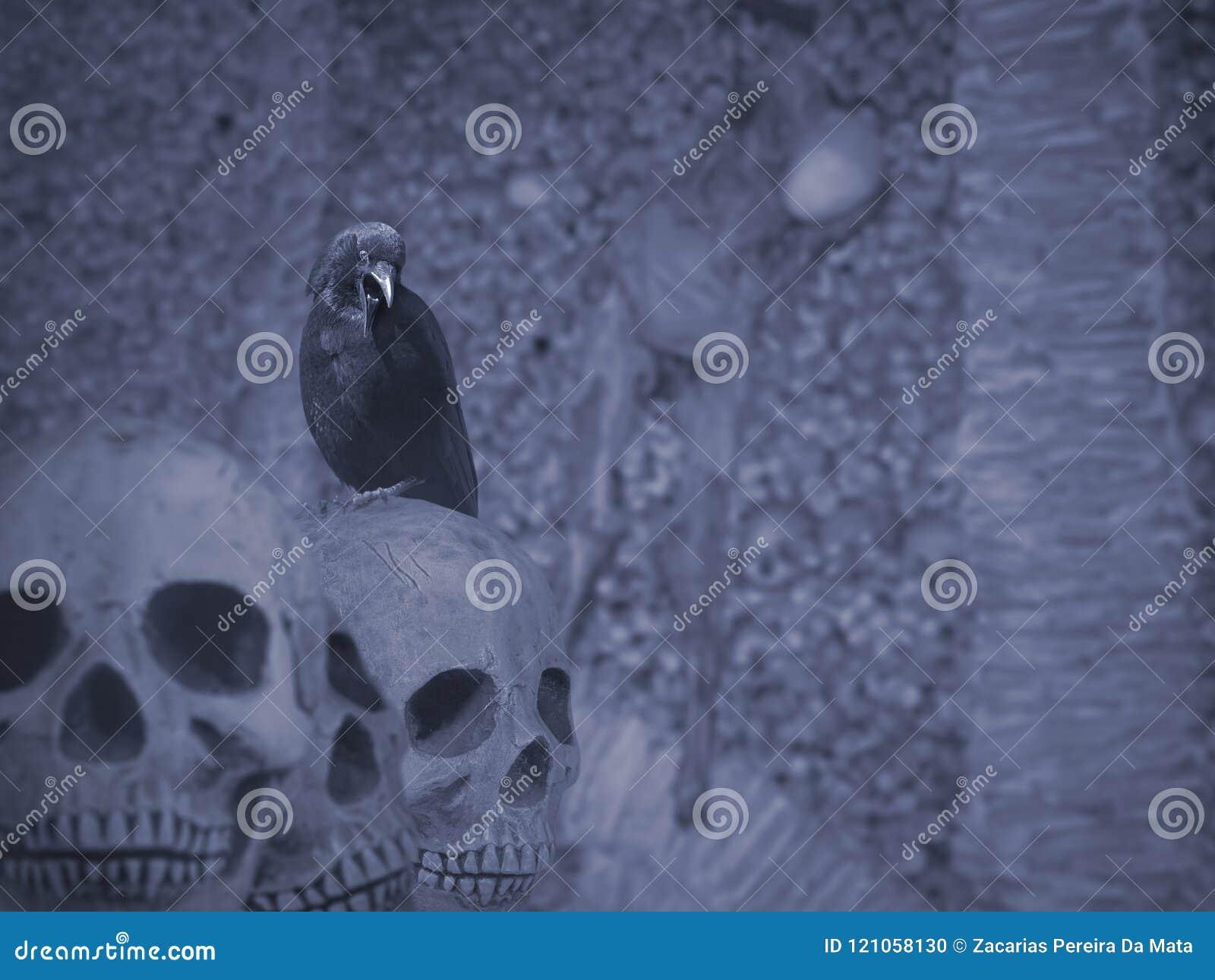 Cuervo Y Cráneos De Halloween Foto de archivo - Imagen de cadáver ...