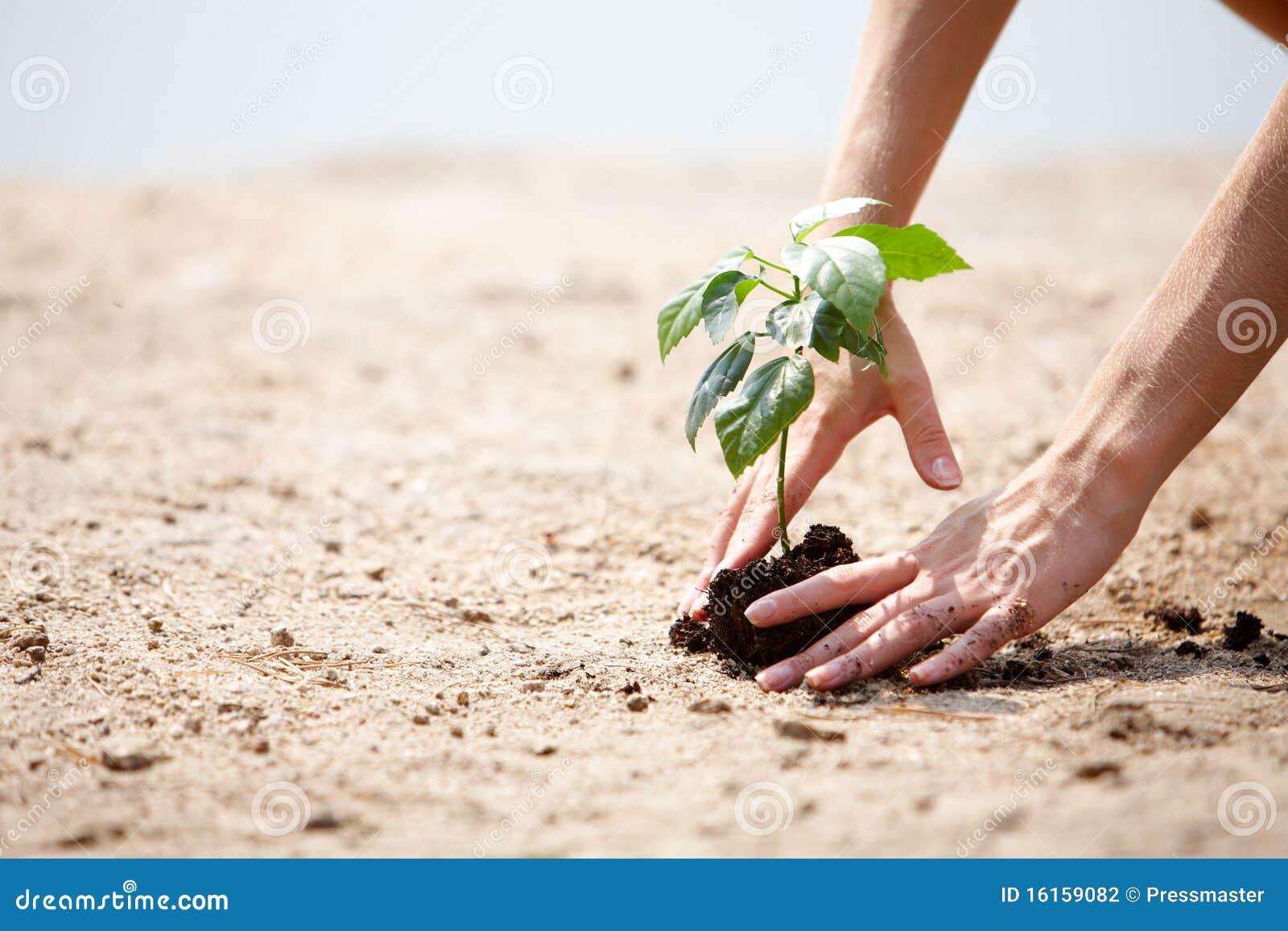 Cuidado de la planta fotograf a de archivo imagen 16159082 for 5 cuidados del suelo