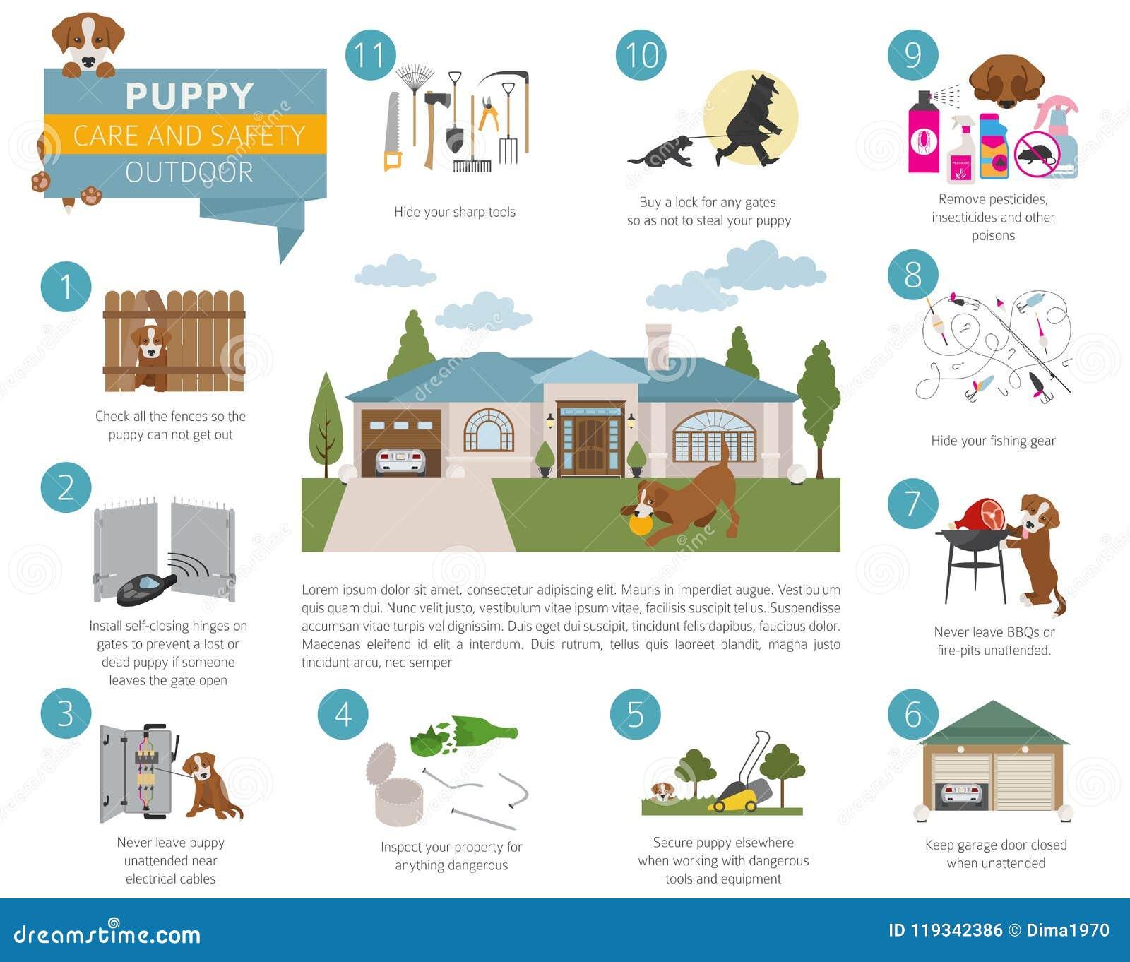 Cuidado e segurança do cachorrinho em sua casa outdoor Treinamento do cão de estimação dentro