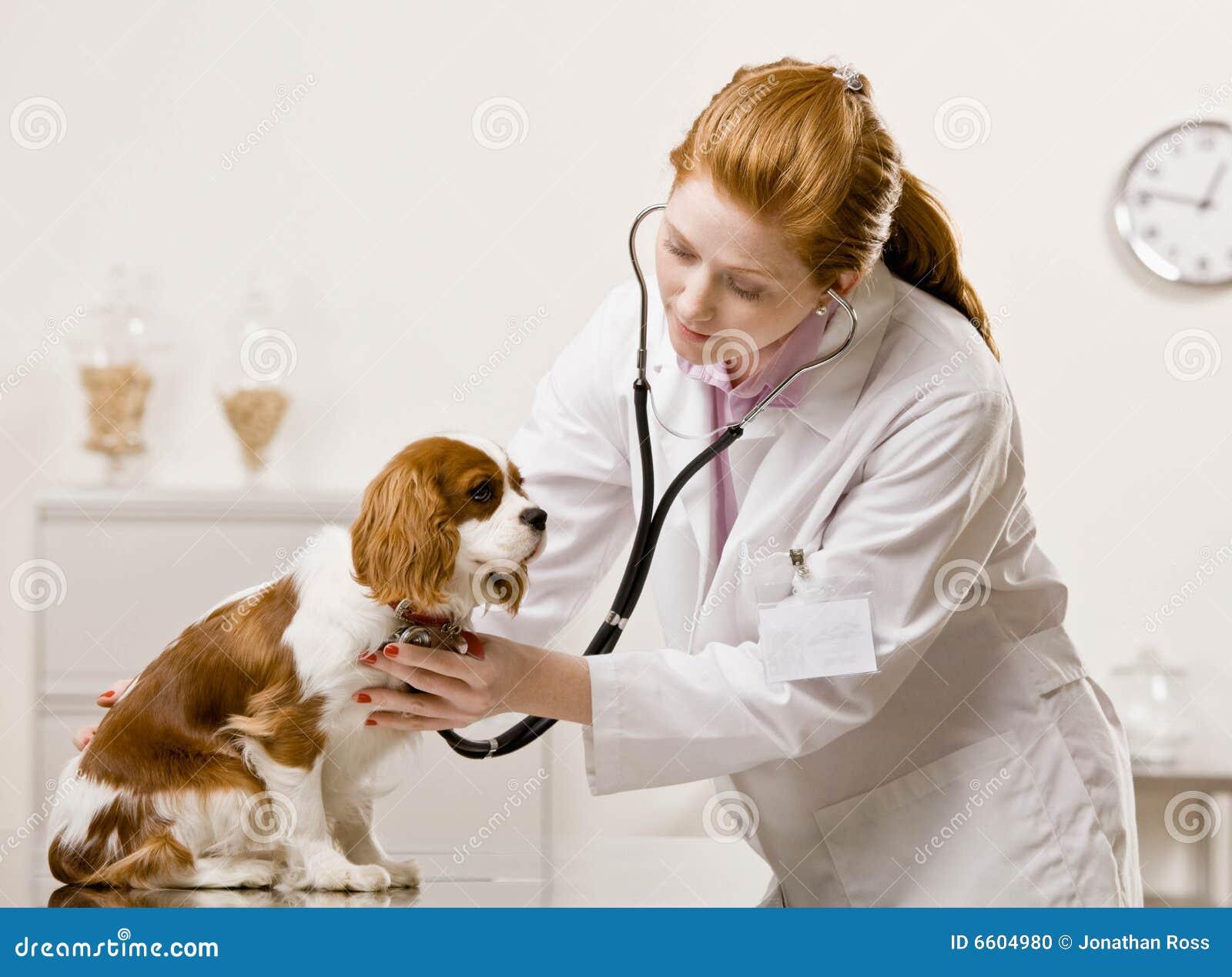Cuidados femeninos del veterinario para el perro