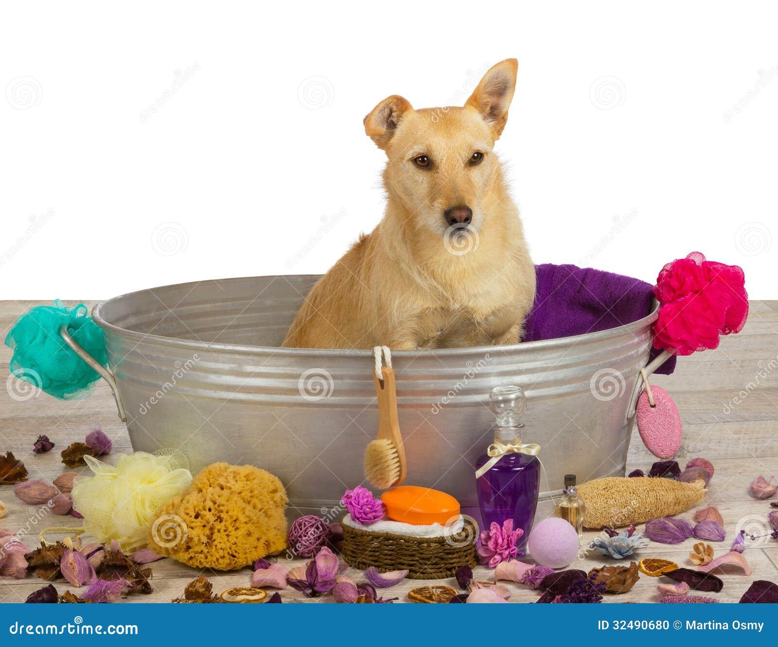 Cuidar tiempo en exceso en la sala del perro