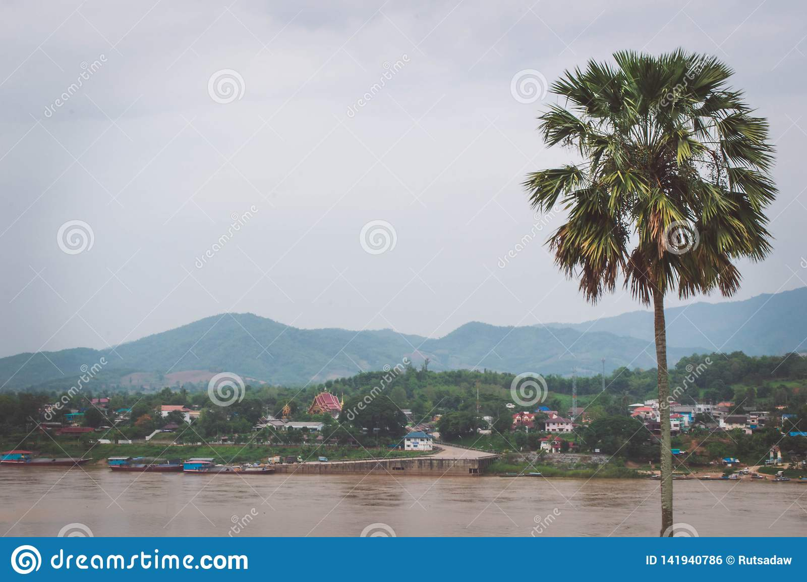 Cukrowa palma jest blisko Mekong rzeki