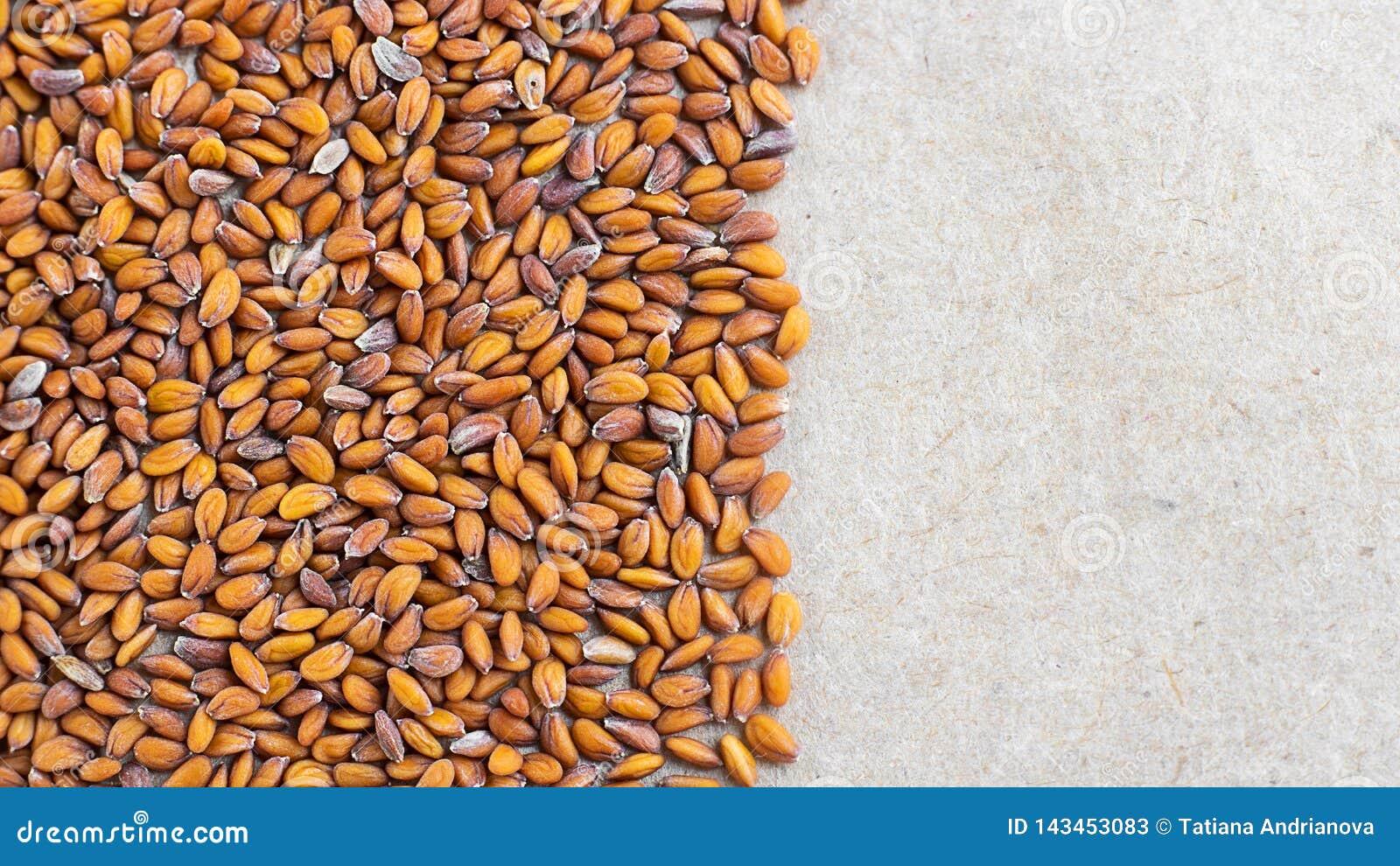 Culticar differente dei semi del crescione acquatico su fondo di carta marrone naturale Può essere usato per creare il nuovo imba