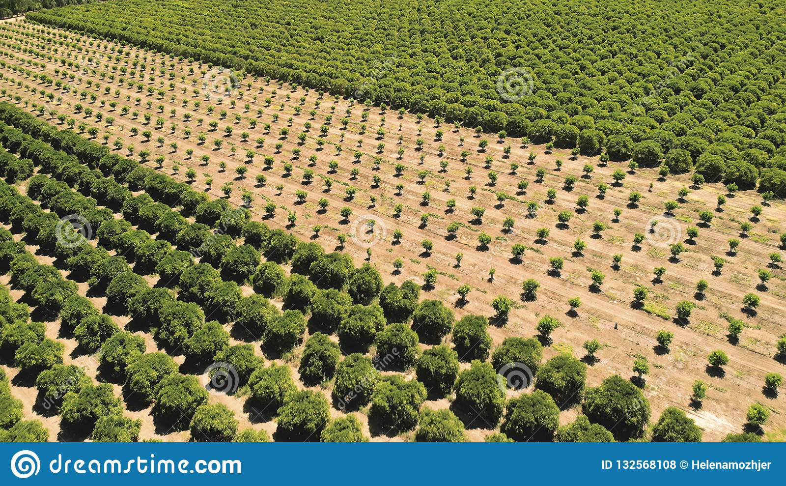 Cultivar Frutas e legumes crescentes agrícolas c da terra de cultivo