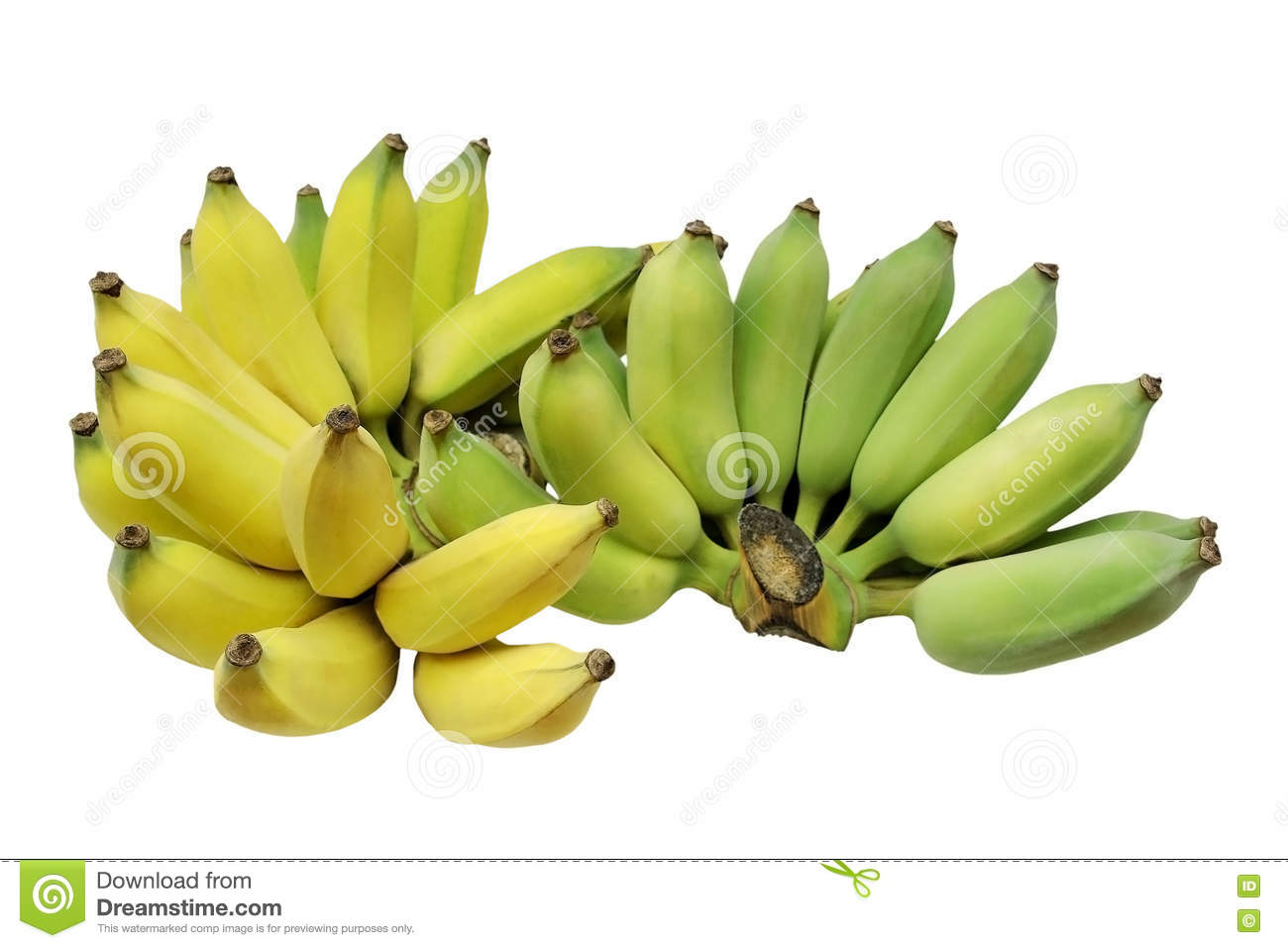 Cultivated banana or Thai banana isolated on white background