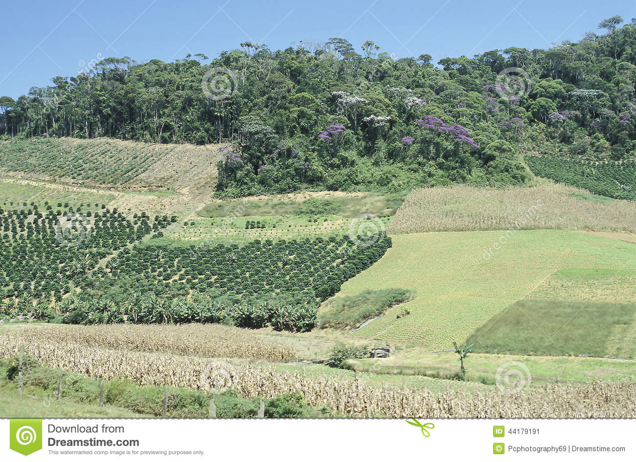 Cultivated fields and deforestation in southern Brazil.